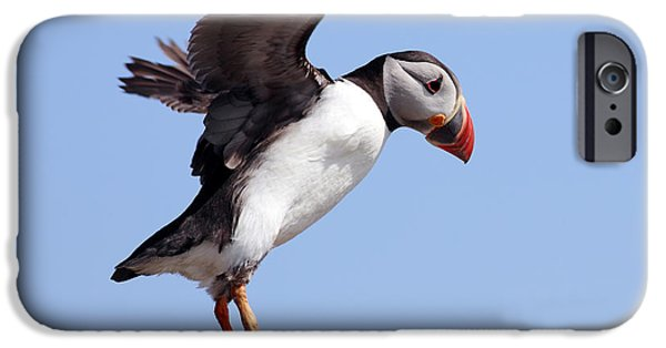 Sea Birds iPhone Cases - Puffin in flight iPhone Case by Grant Glendinning