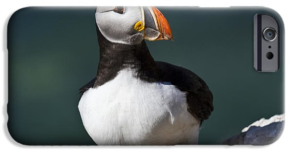 Sea Birds iPhone Cases - Puffin on the Edge of the Rock iPhone Case by Heiko Koehrer-Wagner