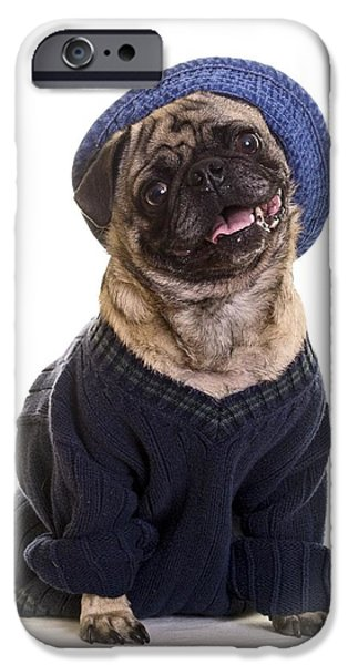 Pug in sweater and hat iPhone Case by Edward Fielding