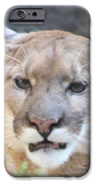 Puma Head Shot iPhone Case by JOHN TELFER