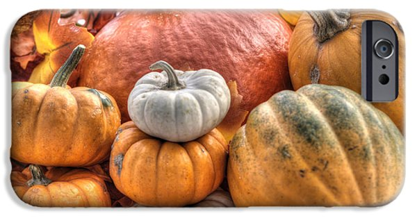 Gourd iPhone Cases - Pumpkin and Gourds iPhone Case by Juli Scalzi