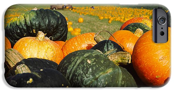 Crops iPhone Cases - Pumpkin Field, Half Moon Bay iPhone Case by Panoramic Images