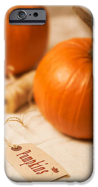 Gourd iPhone Cases - Pumpkin Label iPhone Case by Amanda And Christopher Elwell