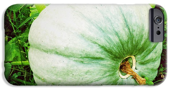 Agriculture iPhone Cases - Pumpkin iPhone Case by Les Cunliffe