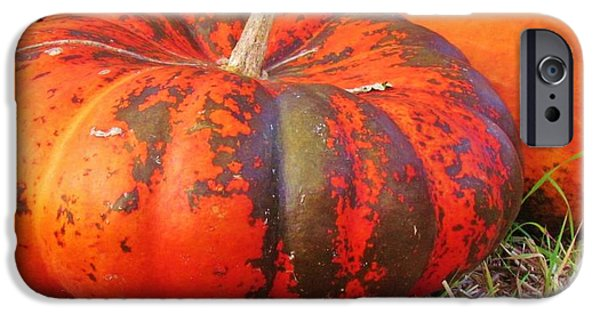 Crops iPhone Cases - Pumpkins iPhone Case by Cynthia Guinn