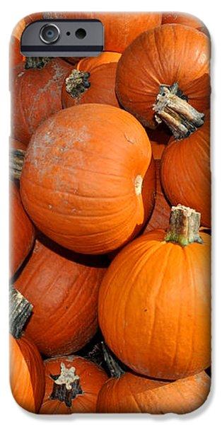 Pumpkins iPhone Case by Diane Lent