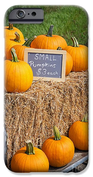 Gourd iPhone Cases - Pumpkins for sale iPhone Case by Jane Rix