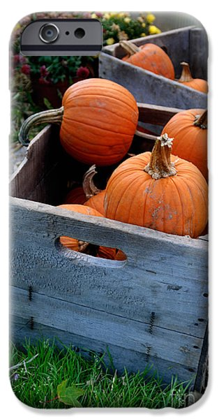 Wooden Crate iPhone Cases - Pumpkins in Wooden Crates iPhone Case by Amy Cicconi