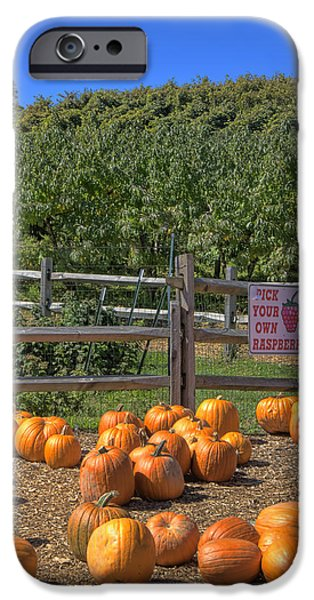 Fall Scenes iPhone Cases - Pumpkins on the Farm iPhone Case by Joann Vitali