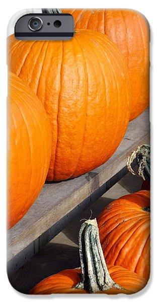 Pumpkins iPhone Case by Valentino Visentini
