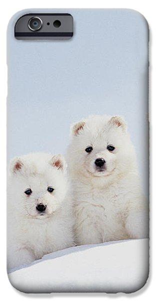 Puppies In Snow iPhone Case by Mitsuyoshi  Tatematsu