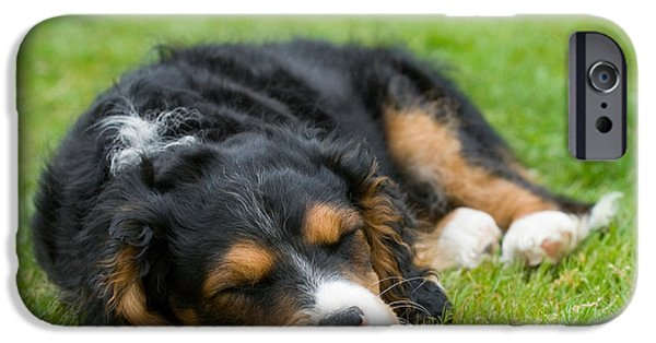Pups Digital Art iPhone Cases - Puppy Asleep with Garden Daisy iPhone Case by Natalie Kinnear