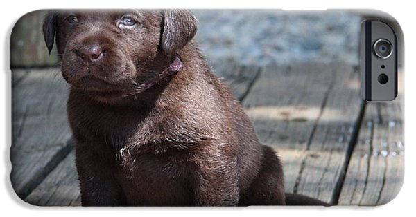 Chocolate Lab iPhone Cases - Puppy iPhone Case by Betty Baker