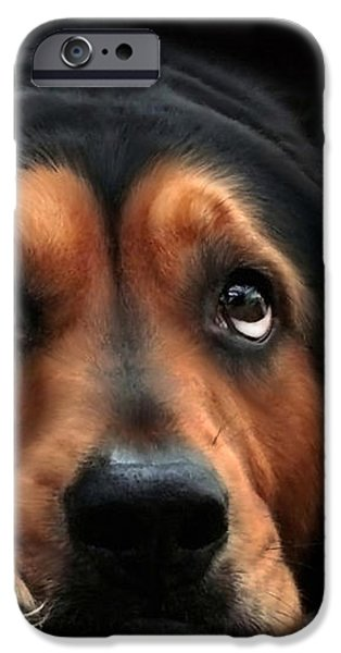 Puppy Dog Eyes iPhone Case by Christina Rollo