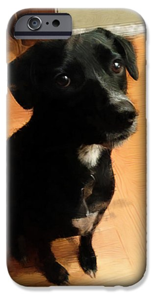 Setter Pointer Puppy iPhone Cases - Puppy Dog Eyes iPhone Case by Paul Gioacchini