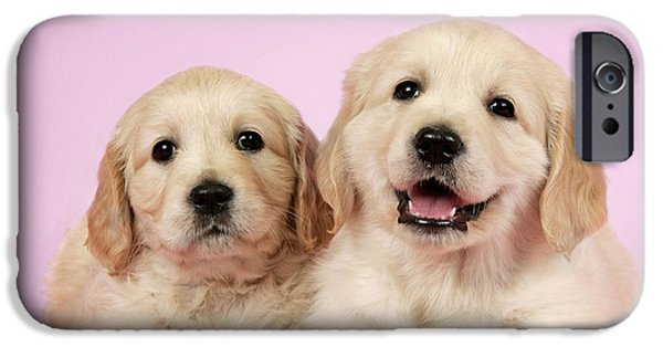Puppies iPhone Cases - Puppy Dogs And Mistletoe iPhone Case by John Daniels/Duncan Usher