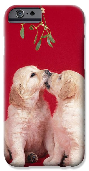 Christmas Greeting iPhone Cases - Puppy Dogs Kissing Under Mistletoe iPhone Case by John Daniels