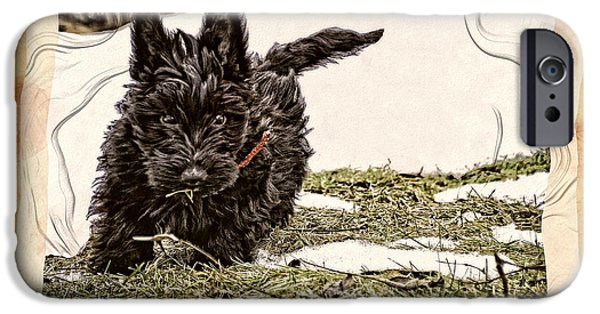 Scottish Terrier Puppy iPhone Cases - Puppy Dreams iPhone Case by Image Takers Photography LLC - Carol Haddon