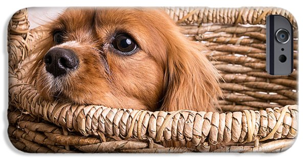 Dog Photography iPhone Cases - Puppy in a laundry basket iPhone Case by Edward Fielding