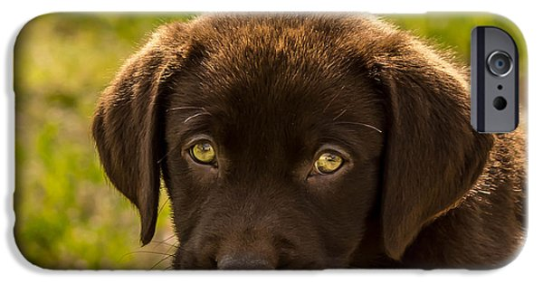 Chocolate Lab iPhone Cases - Puppy iPhone Case by John Ray