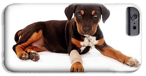 Rottweiler iPhone Cases - Puppy Laying With Injury iPhone Case by Susan  Schmitz