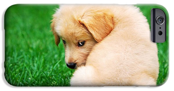 Cute Puppy Photographs iPhone Cases - Puppy Love iPhone Case by Christina Rollo