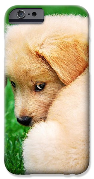 Puppy Love iPhone Case by Christina Rollo
