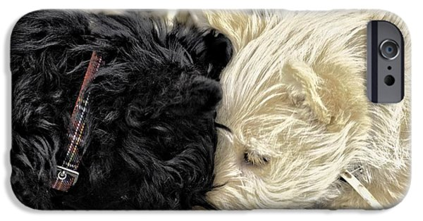 Scottish Terrier Puppy iPhone Cases - Puppy Love iPhone Case by Image Takers Photography LLC - Carol Haddon