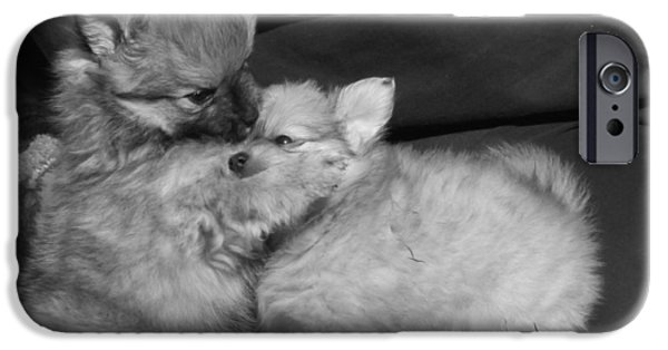 Cute Puppy iPhone Cases - Puppy Love iPhone Case by Sandra Larson
