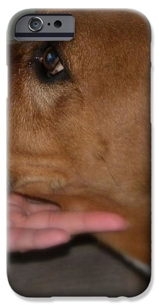 Puppy Loyalty iPhone Case by Sandra Clark
