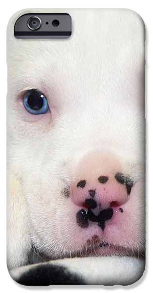 Puppy Pose with 4 spots on Nose iPhone Case by Peggy  Franz