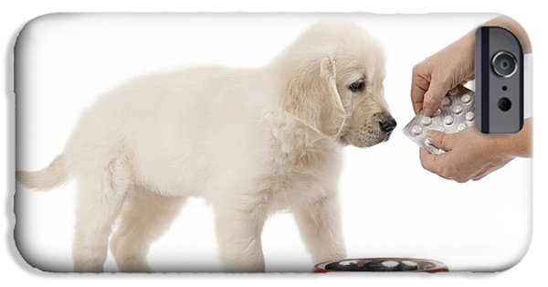 Pet Care iPhone Cases - Puppy Receiving Medicine iPhone Case by Jean-Michel Labat