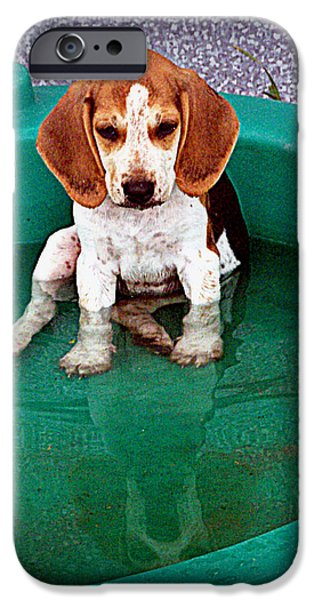 Canine Greeting Cards Digital Art iPhone Cases - Puppy Refection  iPhone Case by Lynn Griffin