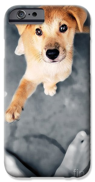Puppy Saluting iPhone Case by William Voon
