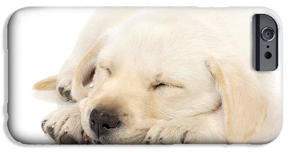 Innocence Photographs iPhone Cases - Puppy sleeping on paws iPhone Case by Johan Swanepoel