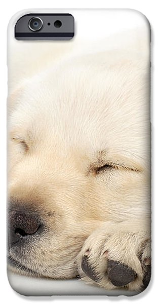 Puppy sleeping on paws iPhone Case by Johan Swanepoel