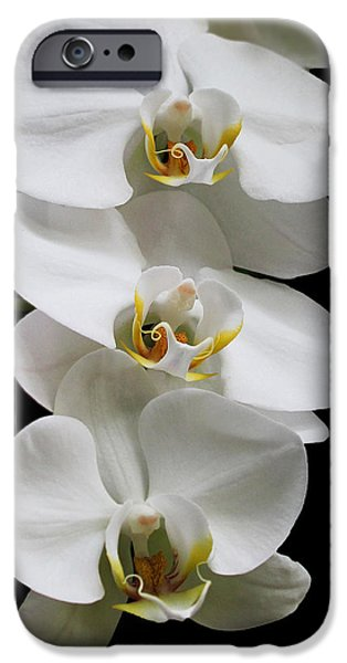Plant iPhone Cases - Pure Beauty iPhone Case by Judy Vincent