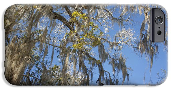 Con iPhone Cases - Pure Florida - Spanish Moss iPhone Case by Christine Till