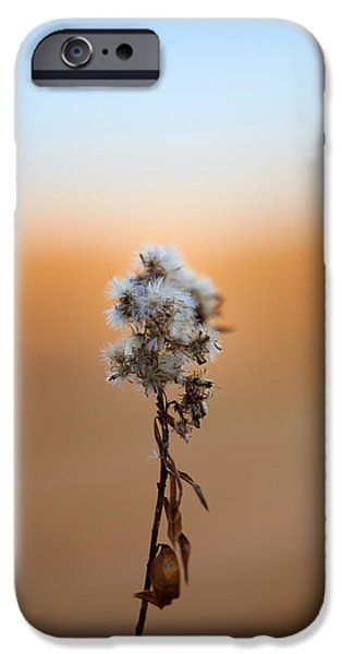 Plants iPhone Cases - Pure Morning iPhone Case by Shane Holsclaw