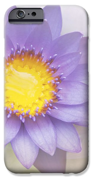 Purity and Grace iPhone Case by Sharon Mau
