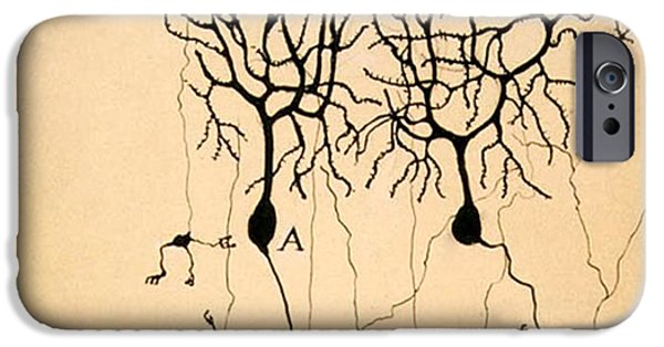 Structure iPhone Cases - Purkinje Cells by Cajal 1899 iPhone Case by Science Source