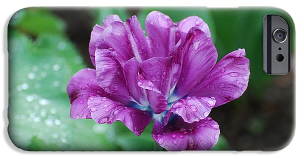Floral Photographs iPhone Cases - Purple and Blue Tulip iPhone Case by DejaVu Designs