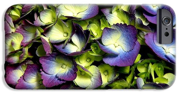 Artists4god iPhone Cases - Purple and ivory hydrangeas iPhone Case by Rose Santuci-Sofranko