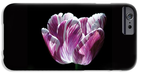 Botanical iPhone Cases - Purple and White Marbled Tulip iPhone Case by Rona Black