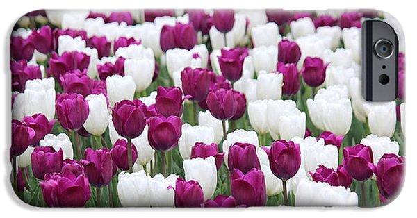 Jordan iPhone Cases - Purple and White Tulips iPhone Case by Rosanne Jordan
