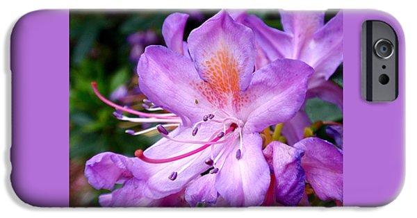 Purple iPhone Cases - Purple Azalea iPhone Case by Rona Black