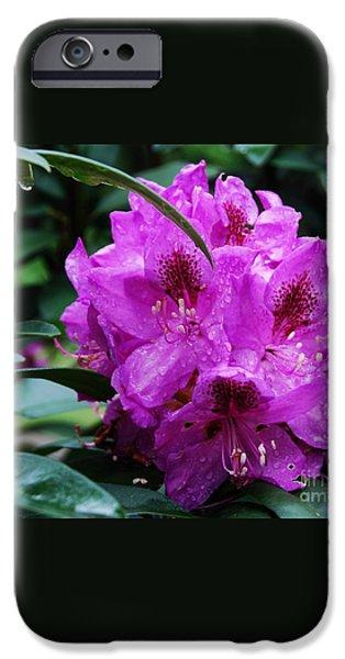 Purple Azelia iPhone Case by Marcus Dagan