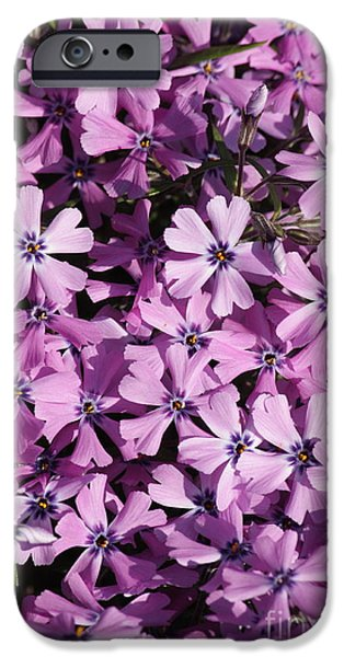 Phlox iPhone Cases - Purple Beauty Phlox iPhone Case by Carol Groenen