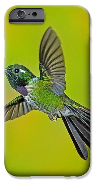 Purple-bibbed Whitetip Hummingbird iPhone Case by Anthony Mercieca