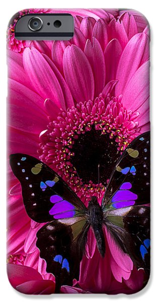Antennae iPhone Cases - Purple Black Butterfly iPhone Case by Garry Gay